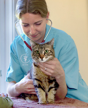 pacific grove animal hospital